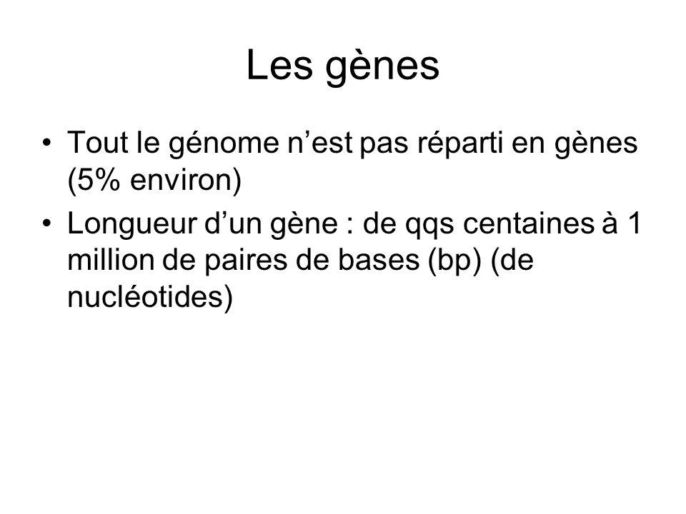 Les gènes Tout le génome n'est pas réparti en gènes (5% environ)