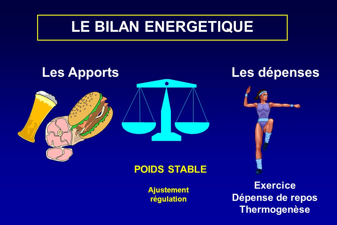 LE BILAN ENERGETIQUE Les Apports Les dépenses POIDS STABLE Exercice