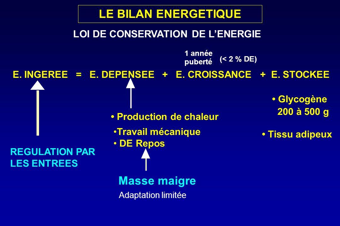 LE BILAN ENERGETIQUE Masse maigre LOI DE CONSERVATION DE L'ENERGIE