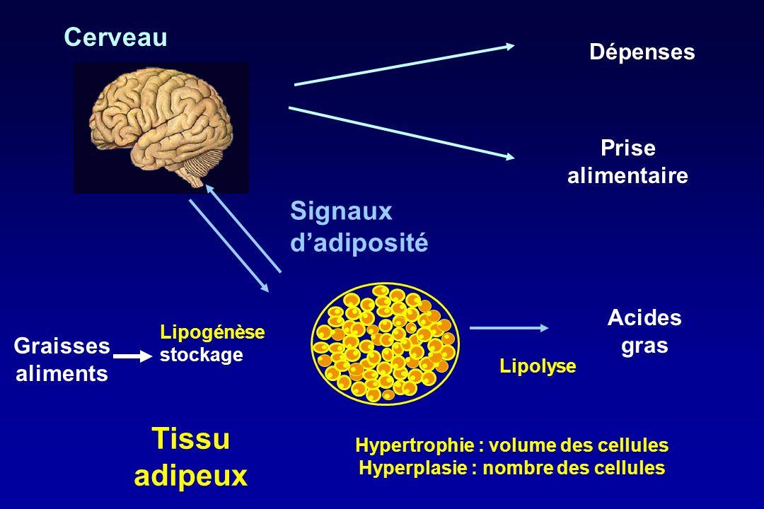 Hypertrophie : volume des cellules Hyperplasie : nombre des cellules