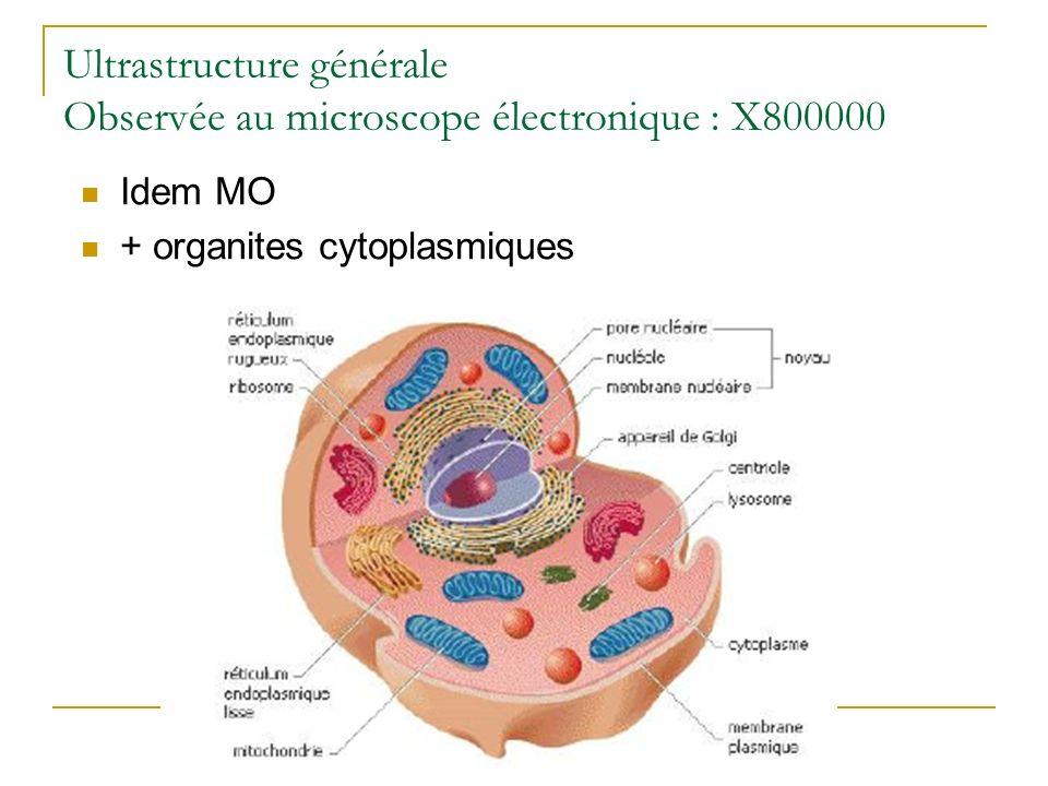 Ultrastructure générale Observée au microscope électronique : X800000