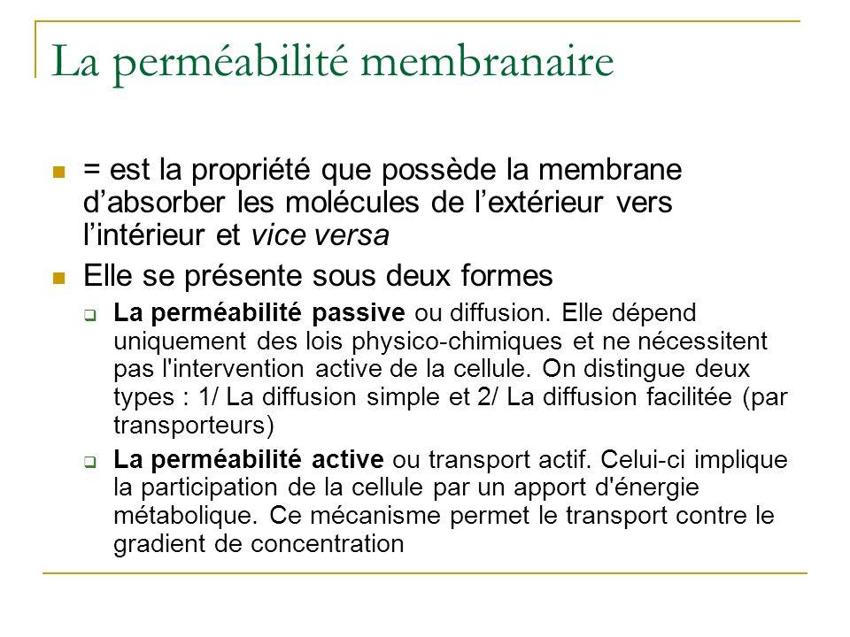 La perméabilité membranaire