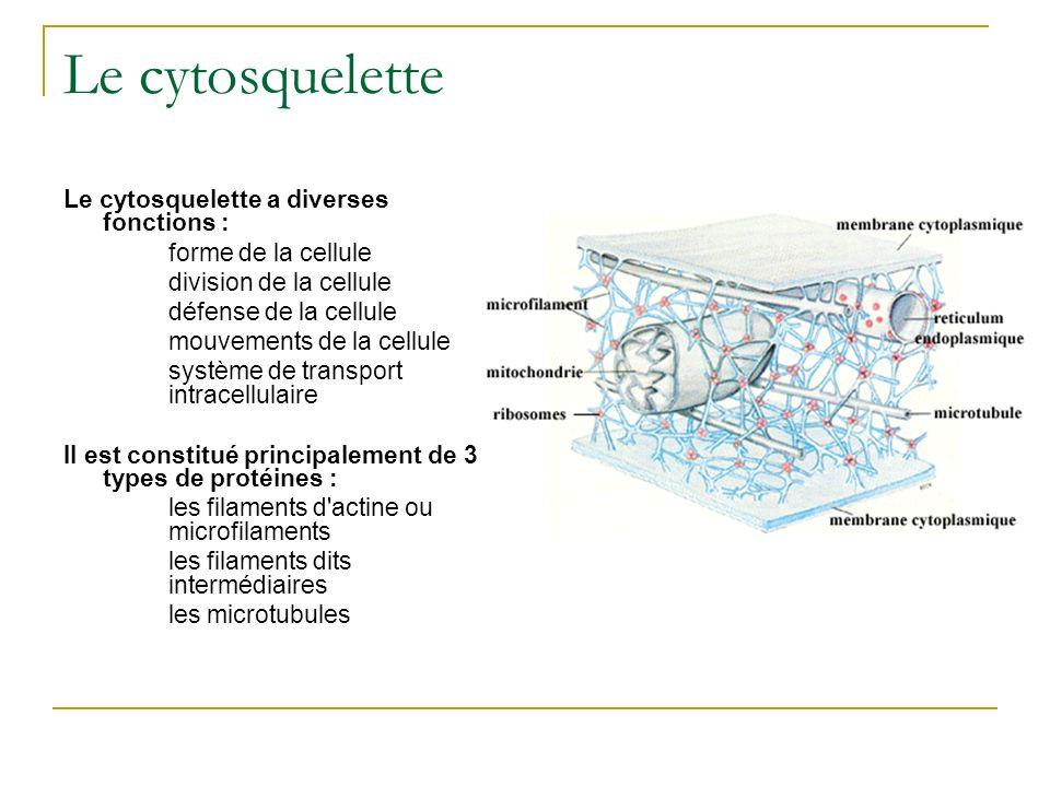 Le cytosquelette Le cytosquelette a diverses fonctions :