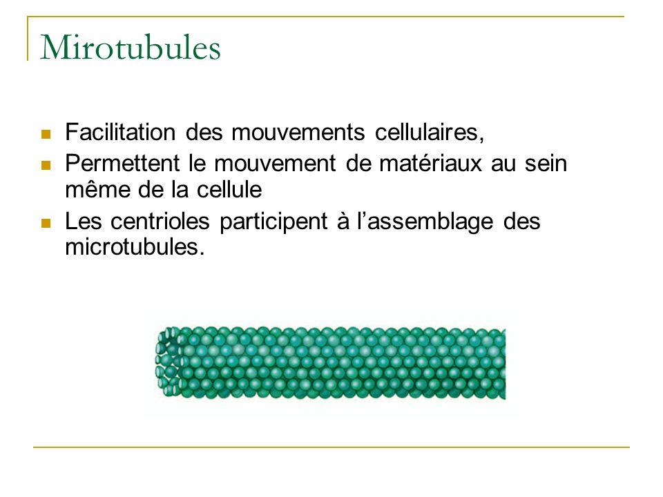 Mirotubules Facilitation des mouvements cellulaires,