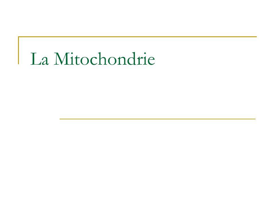 La Mitochondrie