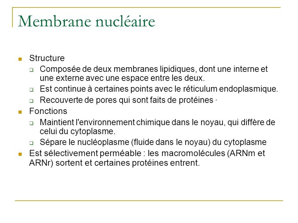 Membrane nucléaire Structure Fonctions