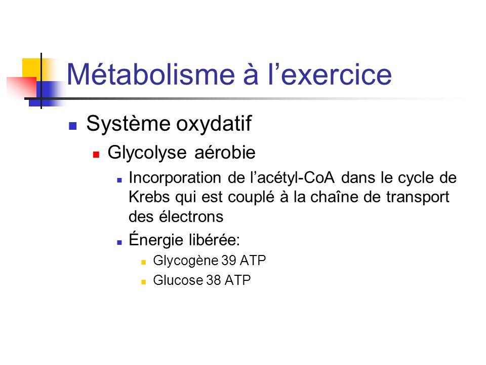Métabolisme à l'exercice
