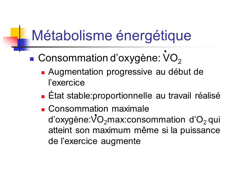 Métabolisme énergétique