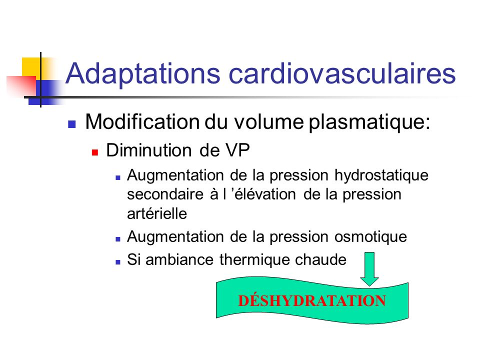 Adaptations cardiovasculaires