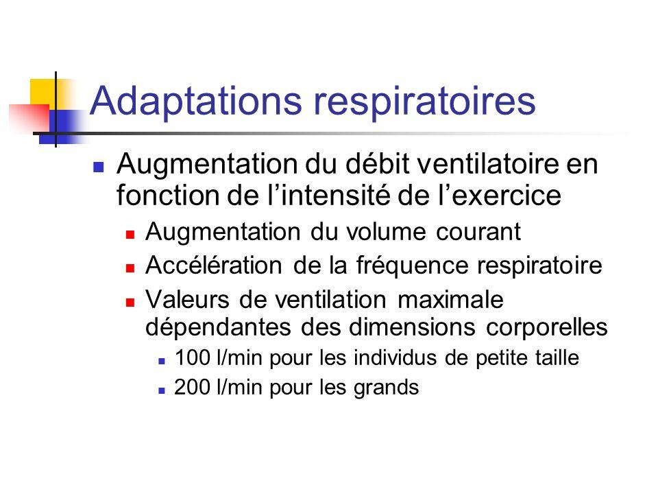 Adaptations respiratoires