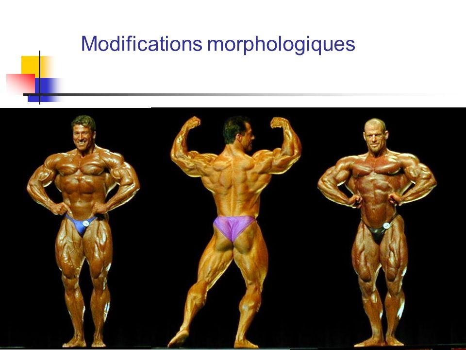 Modifications morphologiques