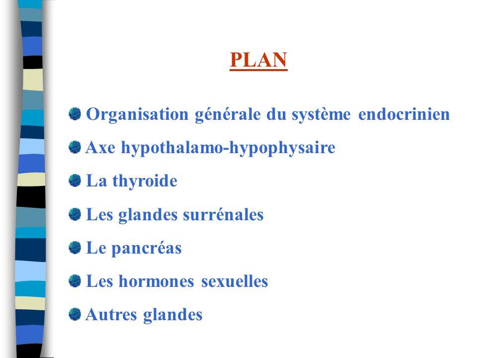 PLAN Organisation générale du système endocrinien