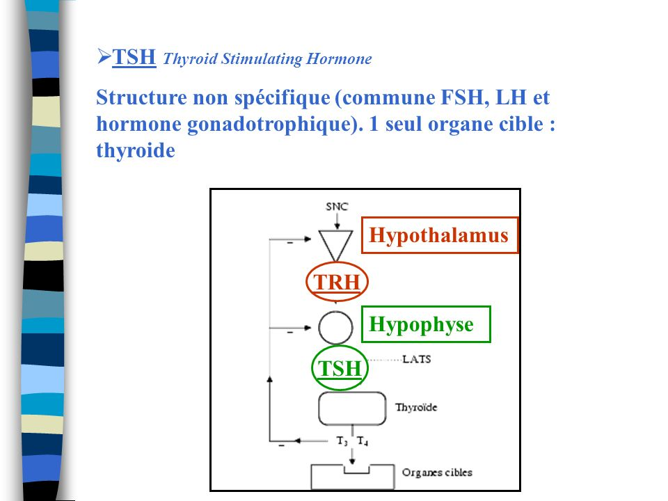 TSH Thyroid Stimulating Hormone