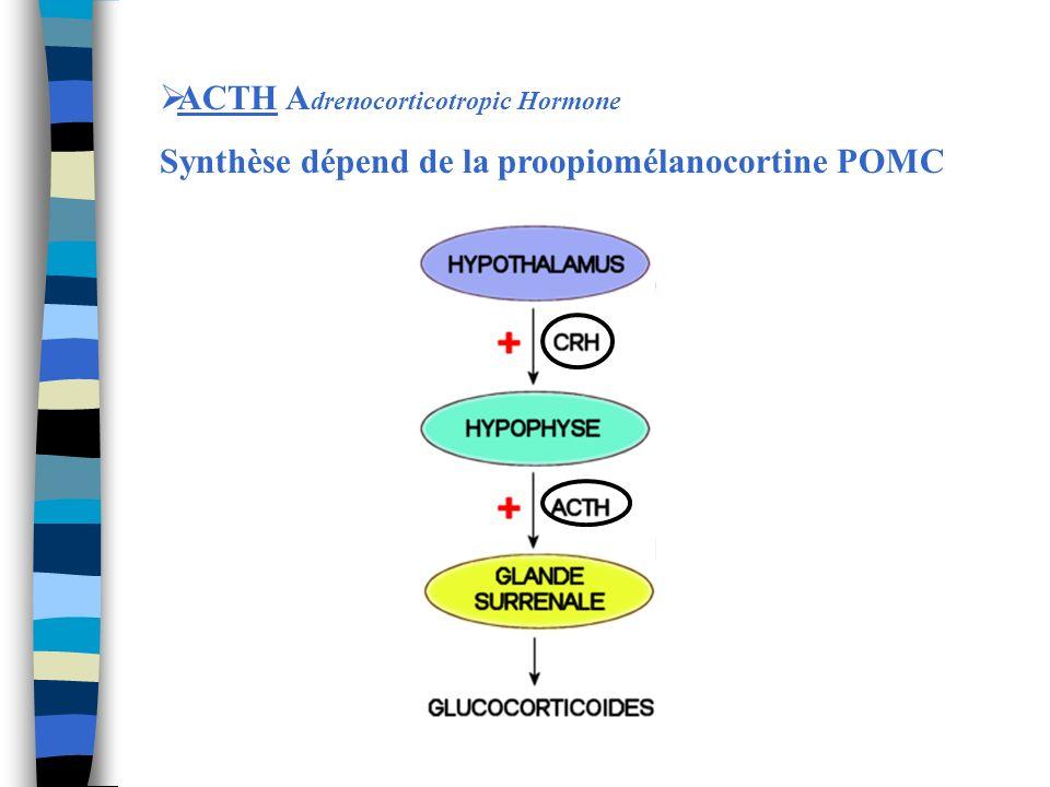 ACTH Adrenocorticotropic Hormone