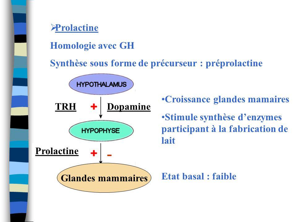 - Prolactine Homologie avec GH