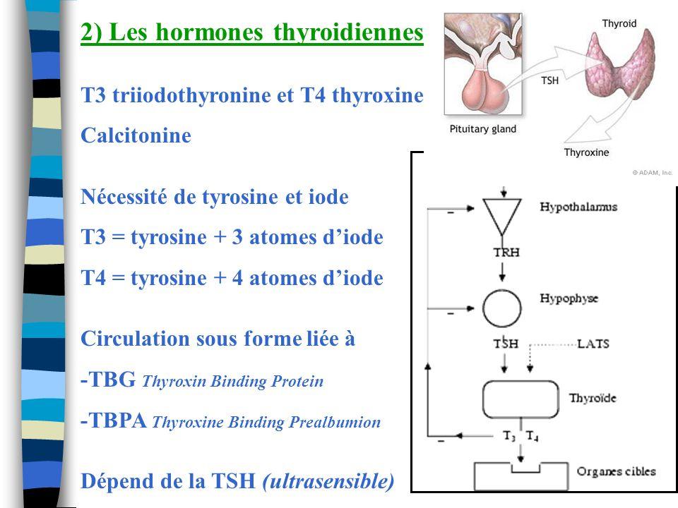 2) Les hormones thyroidiennes