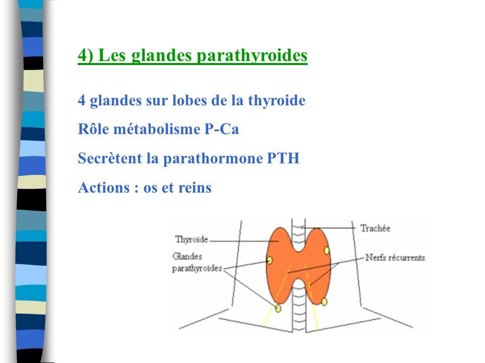 4) Les glandes parathyroides