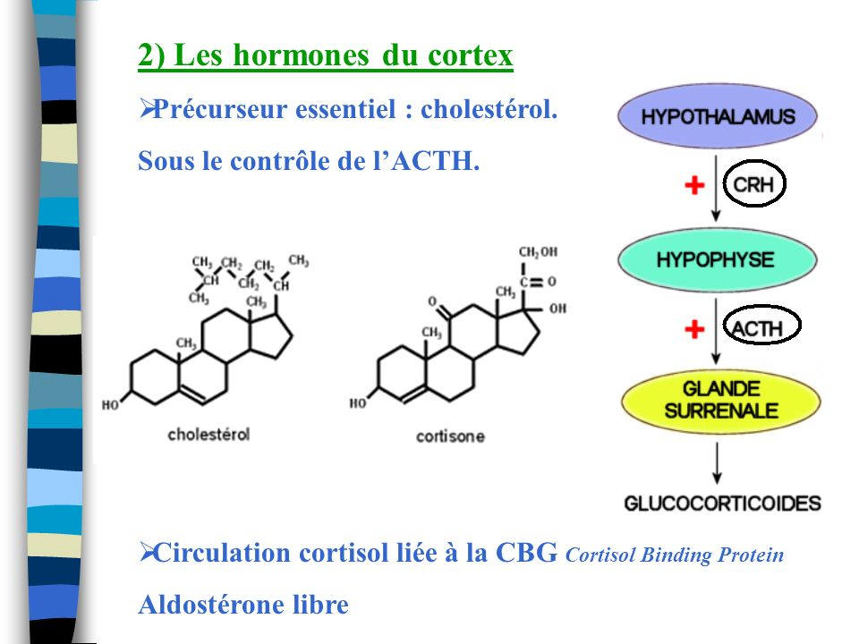 2) Les hormones du cortex
