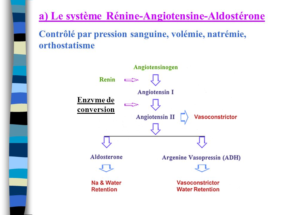 a) Le système Rénine-Angiotensine-Aldostérone