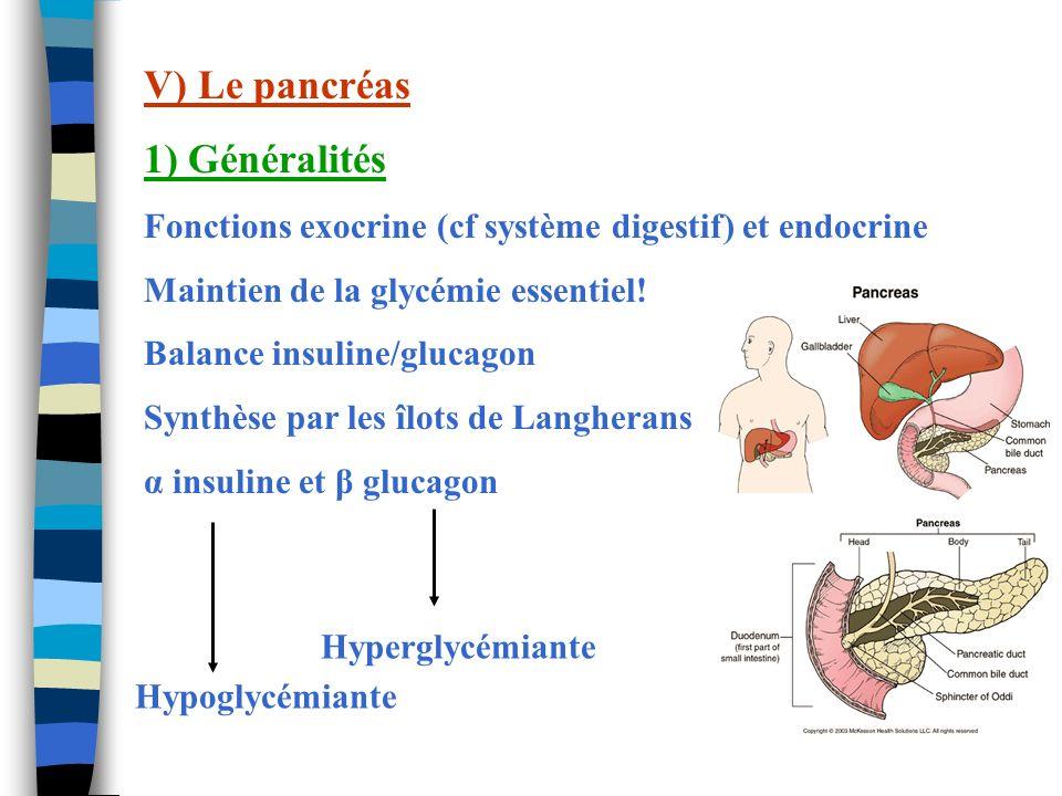 V) Le pancréas 1) Généralités