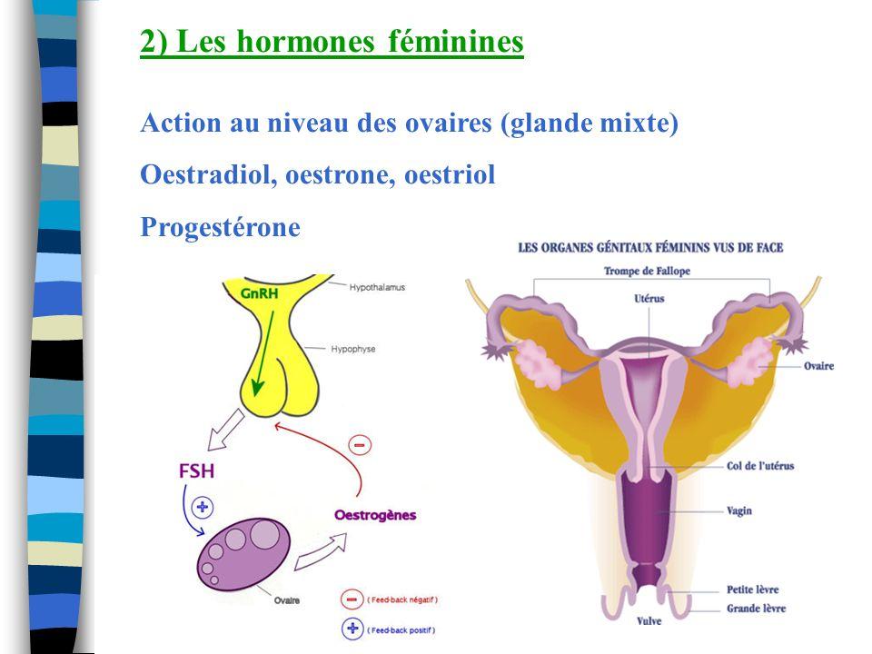 2) Les hormones féminines