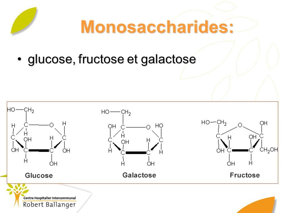 Monosaccharides: glucose, fructose et galactose