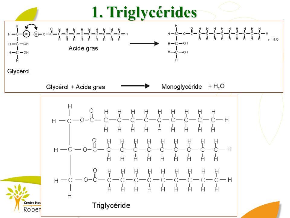 1. Triglycérides