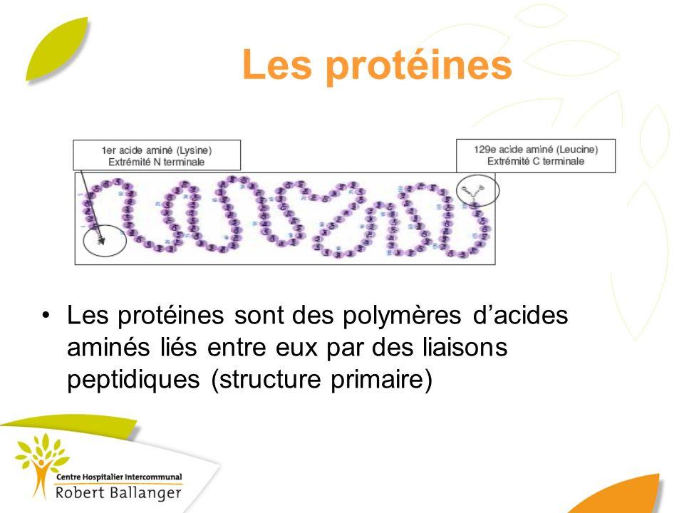Les protéines Les protéines sont des polymères d'acides aminés liés entre eux par des liaisons peptidiques (structure primaire)
