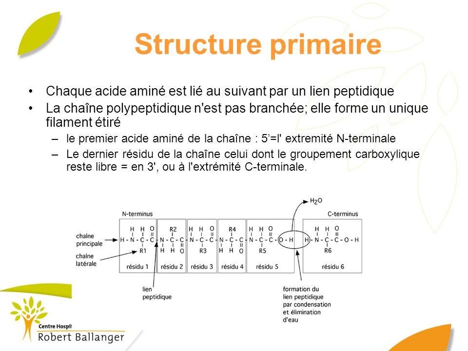 Structure primaire Chaque acide aminé est lié au suivant par un lien peptidique.