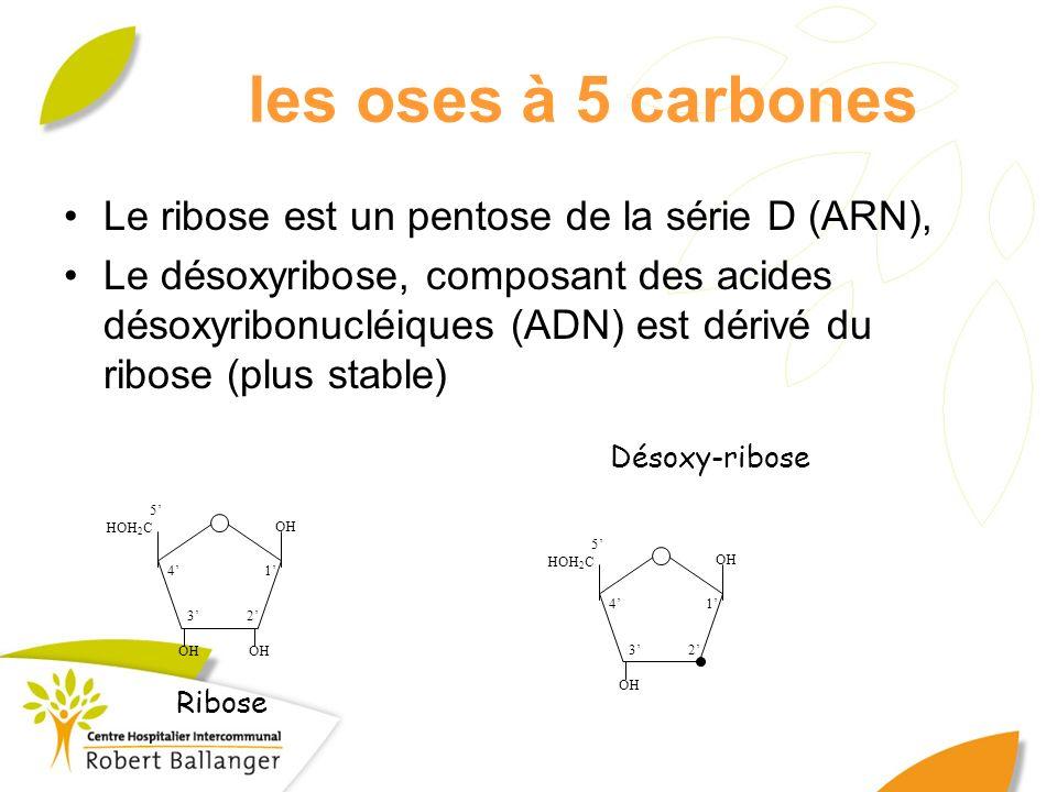 les oses à 5 carbones Le ribose est un pentose de la série D (ARN),