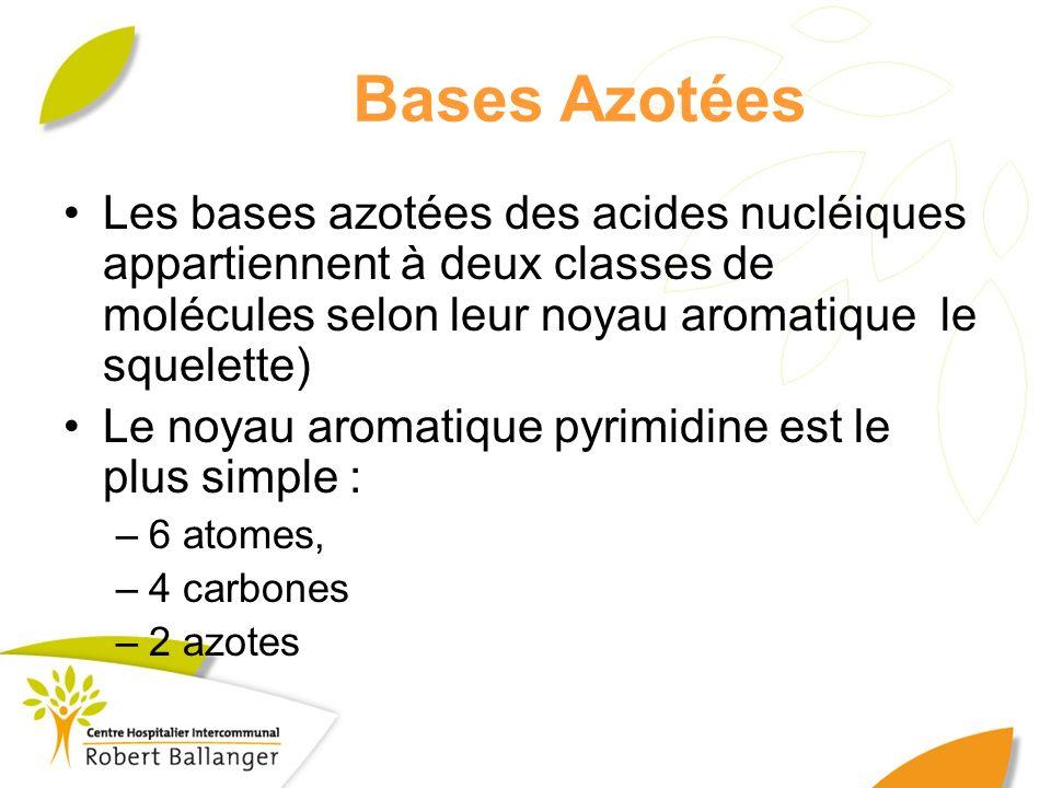 Bases Azotées Les bases azotées des acides nucléiques appartiennent à deux classes de molécules selon leur noyau aromatique le squelette)