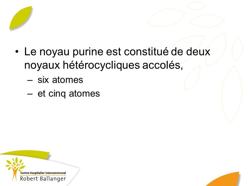 Le noyau purine est constitué de deux noyaux hétérocycliques accolés,