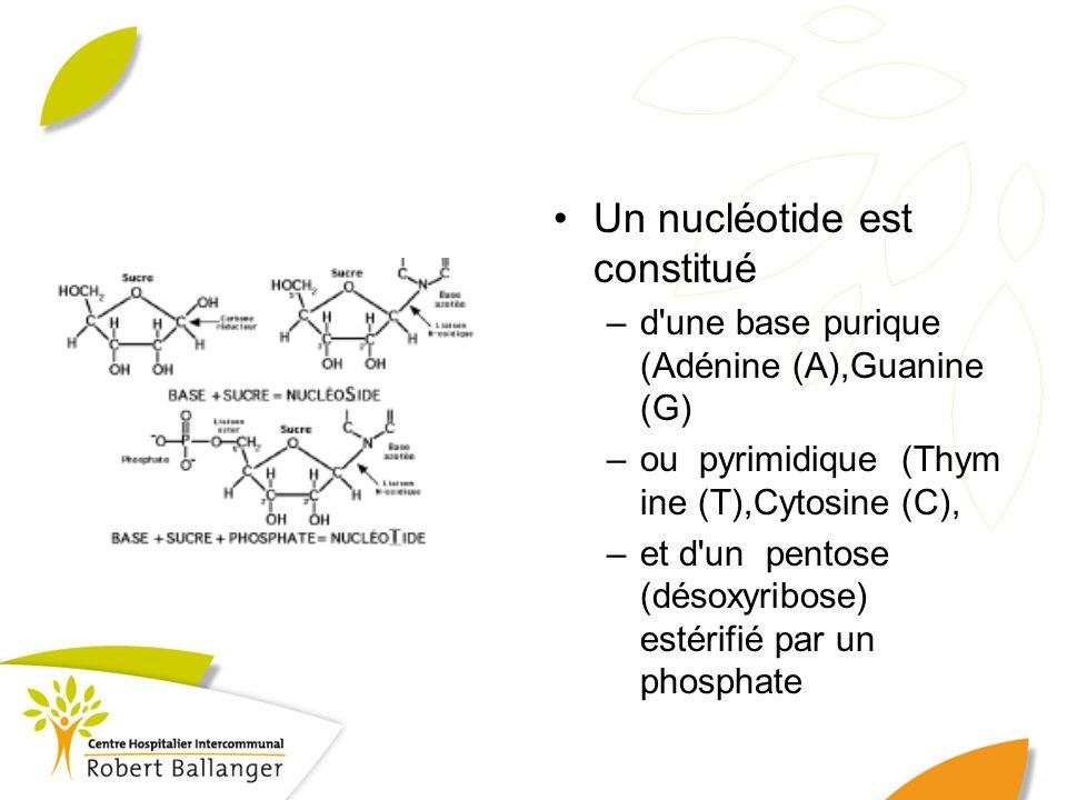 Un nucléotide est constitué