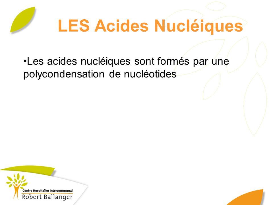 LES Acides Nucléiques Les acides nucléiques sont formés par une polycondensation de nucléotides