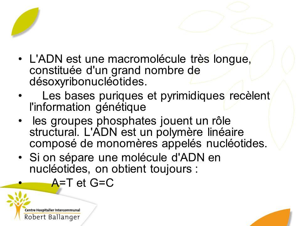 L ADN est une macromolécule très longue, constituée d un grand nombre de désoxyribonucléotides.