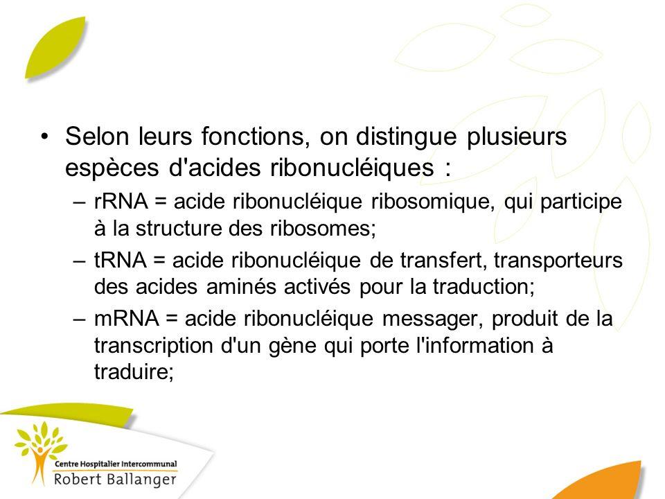 Selon leurs fonctions, on distingue plusieurs espèces d acides ribonucléiques :