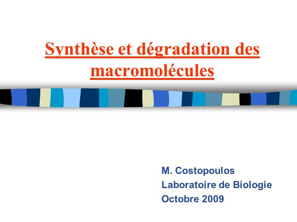 Synthèse et dégradation des macromolécules