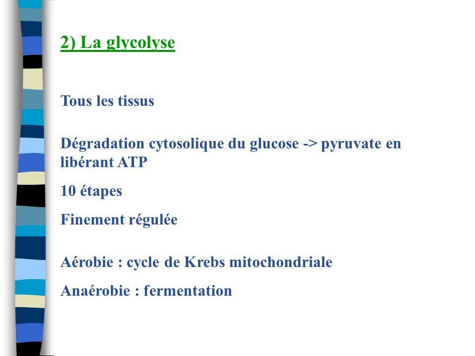 2) La glycolyse Tous les tissus
