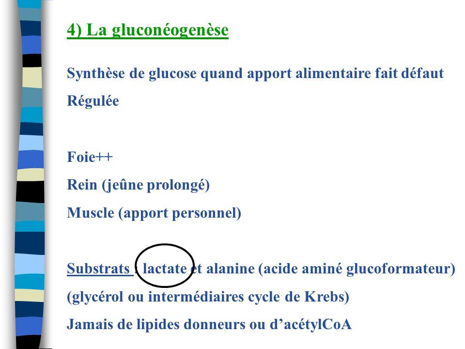 4) La gluconéogenèse Synthèse de glucose quand apport alimentaire fait défaut. Régulée. Foie++ Rein (jeûne prolongé)
