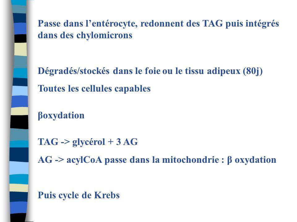 Passe dans l'entérocyte, redonnent des TAG puis intégrés dans des chylomicrons
