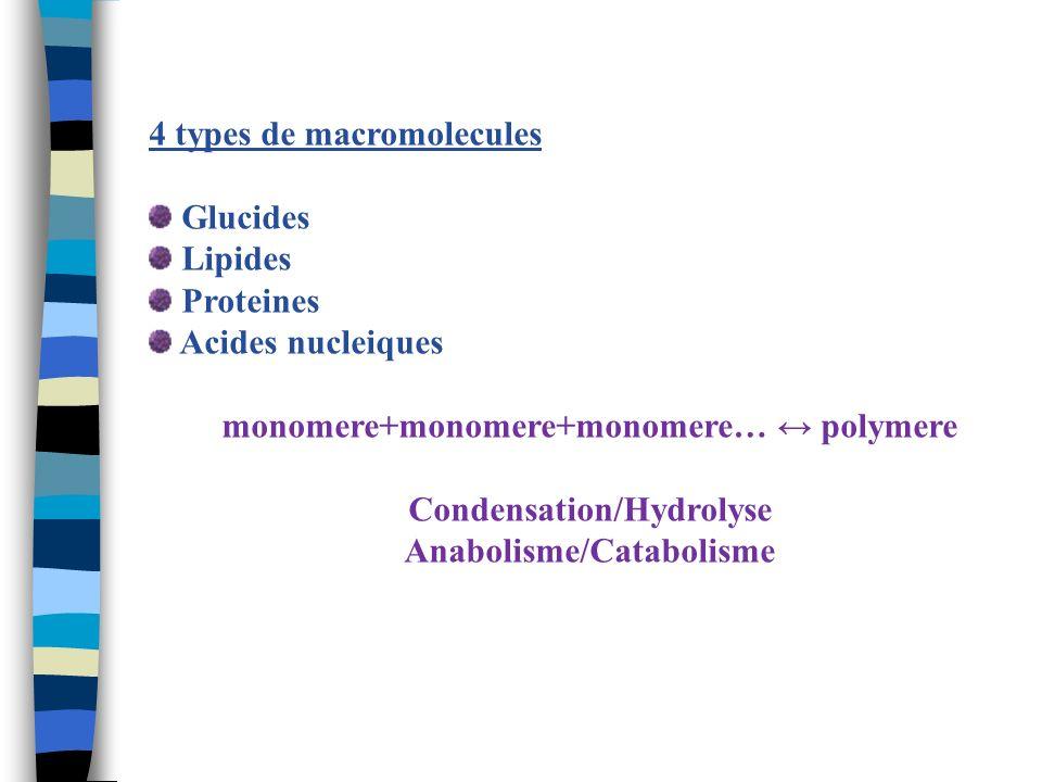 4 types de macromolecules Glucides Lipides Proteines Acides nucleiques