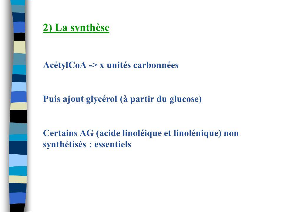 2) La synthèse AcétylCoA -> x unités carbonnées