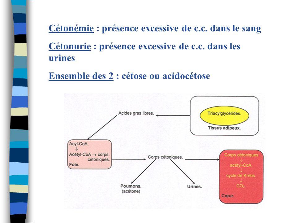 Cétonémie : présence excessive de c.c. dans le sang