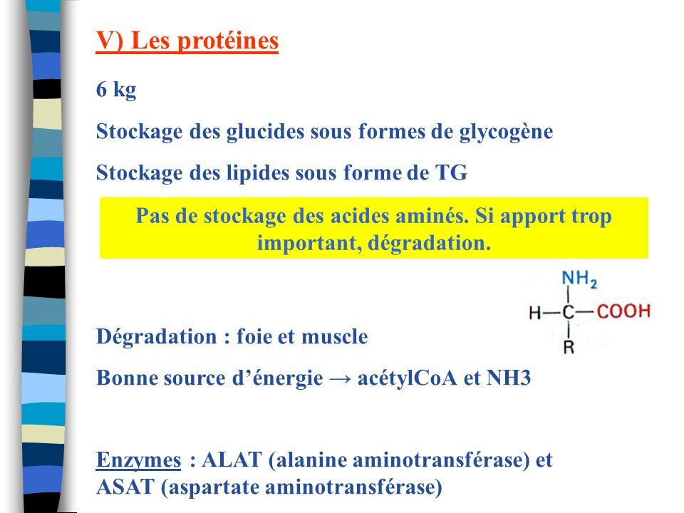 V) Les protéines 6 kg Stockage des glucides sous formes de glycogène
