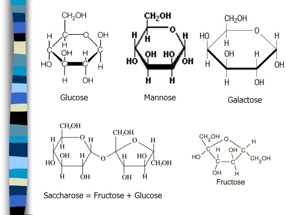 Glucose Mannose Galactose Saccharose = Fructose + Glucose