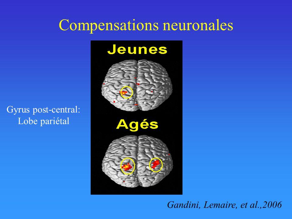 Compensations neuronales