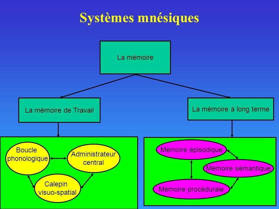 Systèmes mnésiques La mémoire La mémoire de Travail