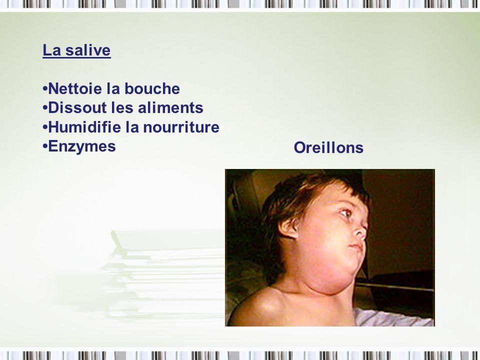 La salive •Nettoie la bouche •Dissout les aliments •Humidifie la nourriture •Enzymes Oreillons