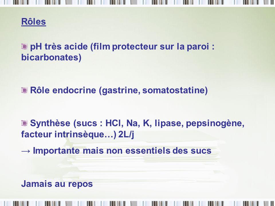 Rôles pH très acide (film protecteur sur la paroi : bicarbonates) Rôle endocrine (gastrine, somatostatine)