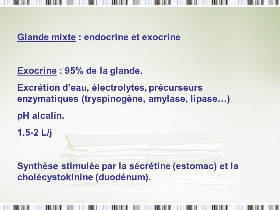 Glande mixte : endocrine et exocrine
